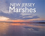 New Jersey Marshes